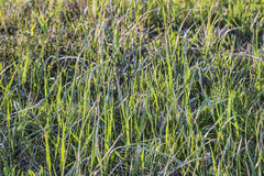 Pasture Imbued With Sunlight. Photograph of pasture with blades of grass imbued with the late afternoon sunlight Stock Images