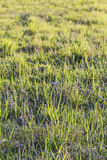 Pasture Imbued With Sunlight. Photograph of pasture with blades of grass imbued with the late afternoon sunlight Stock Photo