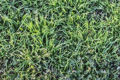Pasture Imbued With Sunlight. Photograph of pasture with blades of grass imbued with the late afternoon sunlight Royalty Free Stock Photography