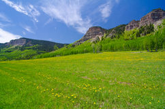 Pasture In The San Juan Mountains In Colorado Royalty Free Stock Image