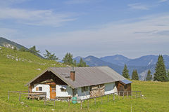 Pasture Laerchkogel Royalty Free Stock Photo