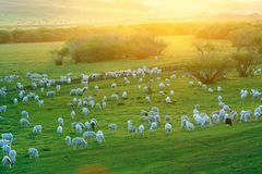 Pasture land Royalty Free Stock Photos