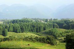 Pasture land with forest Stock Images