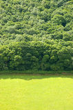 Pasture Land and Forest. Green open pasture land and forest background stock photo
