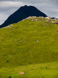 Pasture land, Lofoten, Norway Royalty Free Stock Images