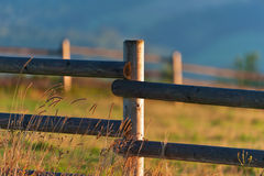 Pasture land in morning Royalty Free Stock Photography