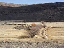 Pasture land in Northern Nevada Royalty Free Stock Photo
