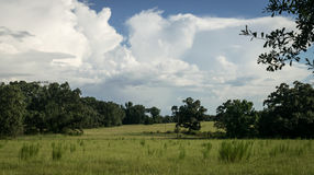 Pasture land in summer on a cloudy day Royalty Free Stock Photography