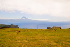 Pasture landscape with Pico mountain behind Royalty Free Stock Images