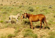 Pasture mares and colts Stock Images