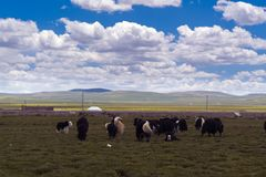 Pasture. Meadows under blue sky and white clouds Royalty Free Stock Photos