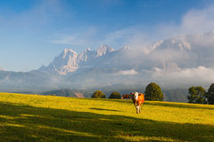On pasture in the morning mist Royalty Free Stock Images