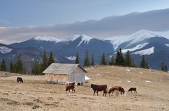 Pasture in the mountain village Stock Image