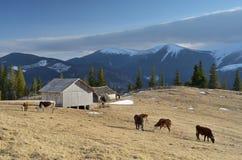 Pasture in the mountain village Stock Photo