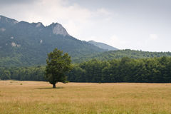 Pasture and mountains Stock Images
