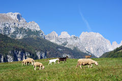 Pasture in the mountains Stock Images