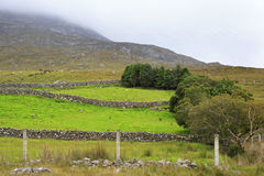 Pasture in the National park Connemara. Stock Image