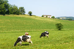 Pasture near Albi (France) Stock Image