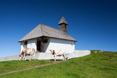 On a pasture near the chapel in Titol Alps, Royalty Free Stock Images