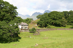 Pasture near Loughrigg Tarn. Beautiful Loughrigg Tarn in The English Lake District National Park with the Langdale Peaks in the Distance Royalty Free Stock Images