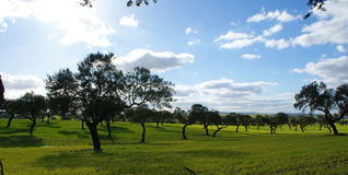 Pasture of oaks and green meadow with blue sky splashed with clouds 3 Royalty Free Stock Images