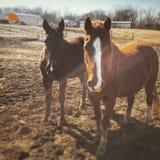 Pasture pals Royalty Free Stock Photos