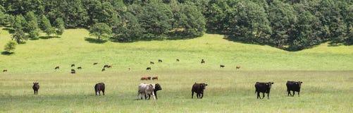 Pasture Panorama Stock Image