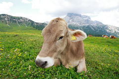 Pasture Prato Piazza Royalty Free Stock Images