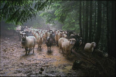 Pasture in the rain royalty free stock photos