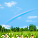 Pasture rural landscape with beauty flowers Royalty Free Stock Photography