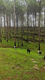 Pasture Royalty Free Stock Photo