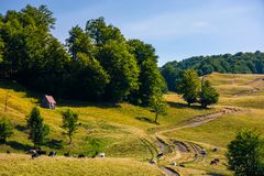 Pasture and shed on the hillside. Lovely summer landscape of Carpatian mountain Royalty Free Stock Image