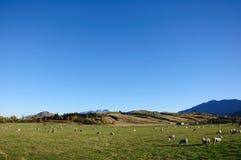 Pasture for sheep. Taken at somewhere Otago, New Zealand Stock Photos