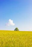 Pasture with Single Tree Royalty Free Stock Photo