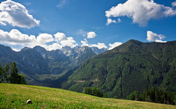 Pasture in Slovenian Alps Stock Photo