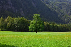 Pasture in Slovenian Alps Royalty Free Stock Photos