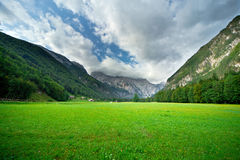 Pasture in Slovenian Alps Royalty Free Stock Photo