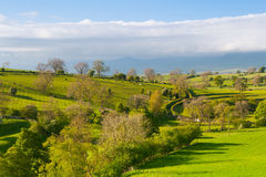 On the pasture, Smardale Gill, Great Britain Royalty Free Stock Image