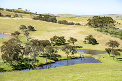 Pasture South Australia Stock Images