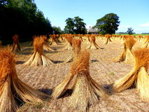 Pasture with straws Royalty Free Stock Image