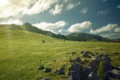 Pasture in the sun rays Stock Photos