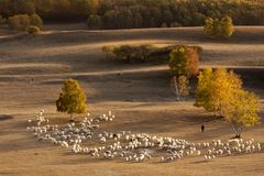 Pasture Royalty Free Stock Images