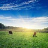 Pasture sunrise Stock Photography