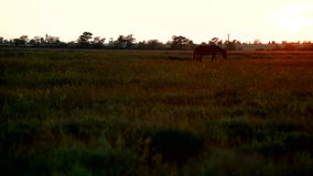 Pasture at sunset Royalty Free Stock Images