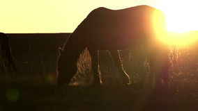 Pasture at Sunset stock video footage