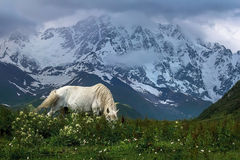 Pasture. Svaneti mountains in summer witha horse pasturing Royalty Free Stock Photo