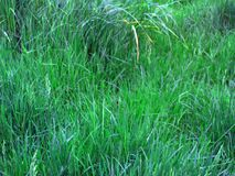 Grasses Provide a Simple Beauty that`s Easy to Appreciate. A pasture is a thing of beauty. The long and short grasses, the green and greener, rippling in the stock photo