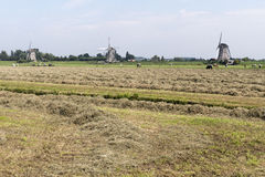 Pasture with three windmills. Royalty Free Stock Photos