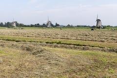 Pasture with three windmills. Royalty Free Stock Photos