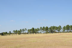 Pasture with trees. Field, North Central Texas, blue sky, fall, pine trees Stock Photo